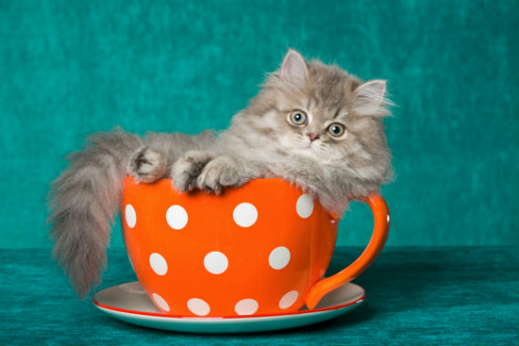 london-cafes-quirky-cats