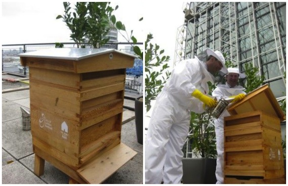 bee keeping green london