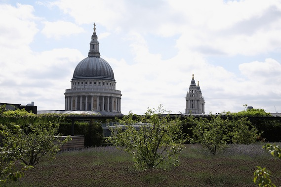 st pauls from merrill lynch green roof
