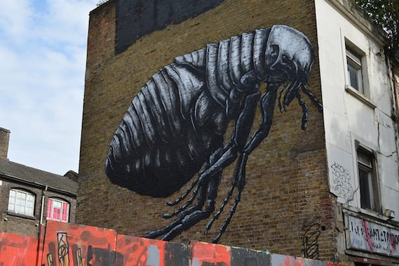 roa flea London street art and graffiti